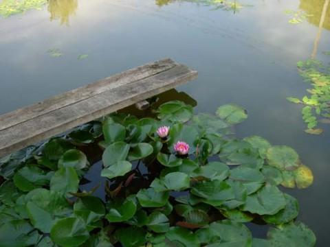 очистить водоем от водорослей